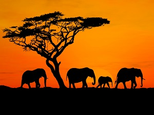 4 Africa Travel Tips for the Ultimate Adventure