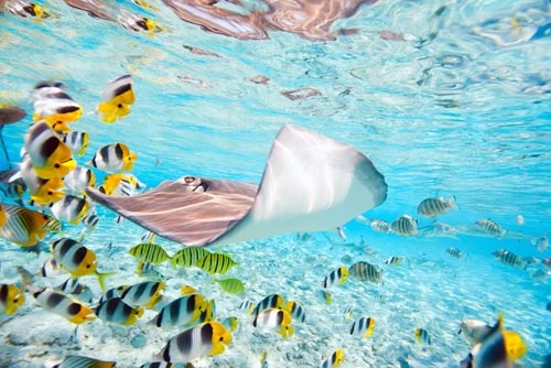 sting ray and fish swimming through aquarium